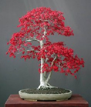 2014 MAR 11 BONSAI 300