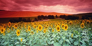 2013 dec 25 crop 300 bbb panorama