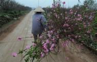 thơ thiếu khanh: Bên Ngoài Mùa Xuân