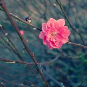 Ngày Xuân, Lại Nói Chuyện Tháng Giêng