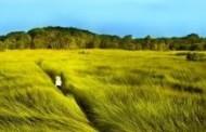 Bạo Lực và Tha Hoá Trong Cánh Đồng Bất Tận của Nguyễn Ngọc Tư