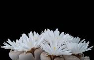 thơ lưu nguyễn đạt -- SÔNG NÚI HẬN -- VIDEO : DẬY MÀ ĐI ! Hỡi Đồng Bào Ơi