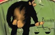 Luật Rừng