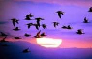 Beautiful Videos: Wings to Paradise [1&2]    ---    Tuyệt Đẹp: Bay Đi Đâu?  Bay Về Đâu?