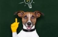 VIDEO: Useful Dog Tricks Performed by Jesse: Nếu Ai Cũng Giỏi Bằng Jesse Thì Đỡ Quá Rồi!
