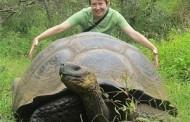 Rùa Khổng Lồ Bí Ẩn Giữa Đại Dương