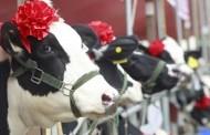 Việt Nam: Ba Tỉ Đô La Và Trái Phiếu Có Gỡ Được Khó Khăn Khi Nợ Công Chồng Chất ?