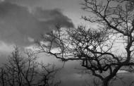 Lý Hạ: Đảo Điên Giữa Cuộc Phù Hư
